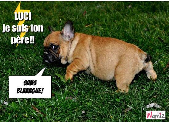 I am the Dog!, lolcats réalisé sur Wamiz
