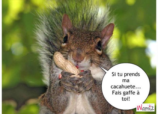 i love cacahuetes, lolcats réalisé sur Wamiz