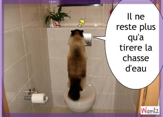 Il y a des chats vraiment très propre , lolcats réalisé sur Wamiz