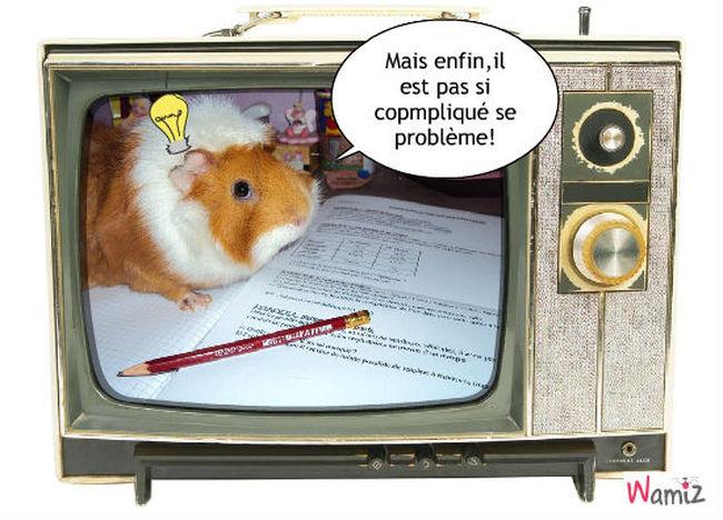 Intelo hamster , lolcats réalisé sur Wamiz