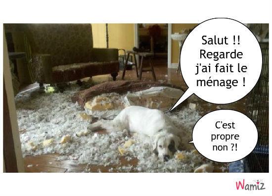 J'AI FAIT LE MENAGE !!!, lolcats réalisé sur Wamiz