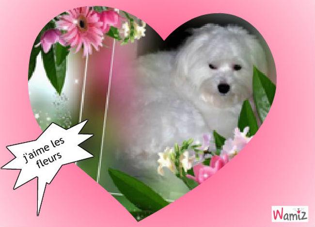 j'aime les fleurs, lolcats réalisé sur Wamiz