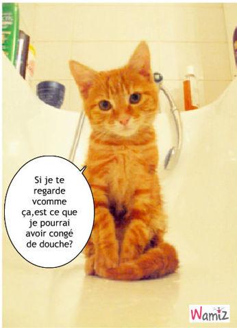 J'aime pas la douche!, lolcats réalisé sur Wamiz