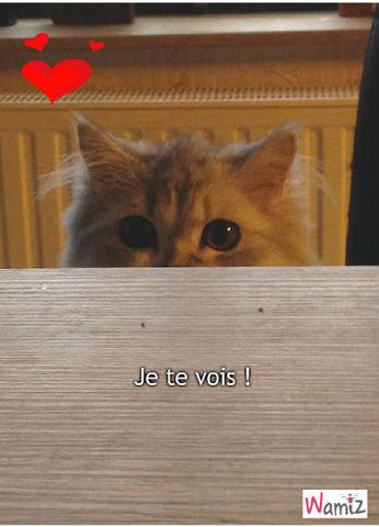 Je te vois !, lolcats réalisé sur Wamiz