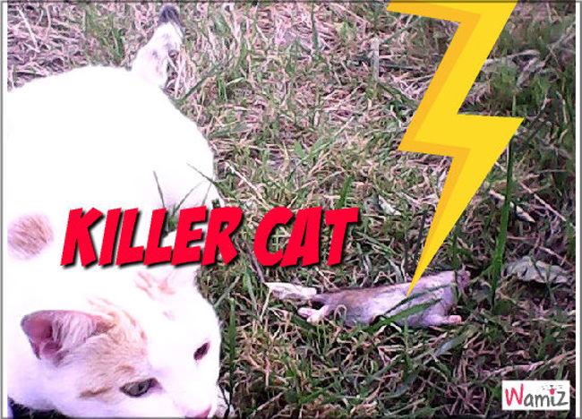 Killer Cat, lolcats réalisé sur Wamiz