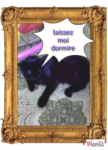 kitty veux pas jouer avec moi, lolcats réalisé sur Wamiz
