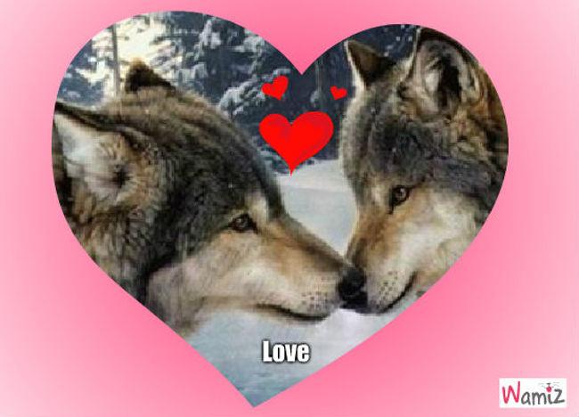 L'amour, lolcats réalisé sur Wamiz