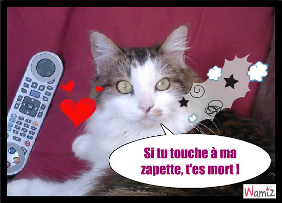 amour chat fr Levallois-Perret