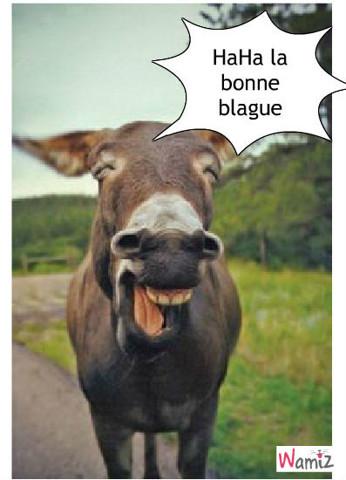 l'âne qui rigole, lolcats réalisé sur Wamiz