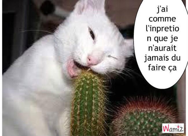 l'attaque des cactus, lolcats réalisé sur Wamiz