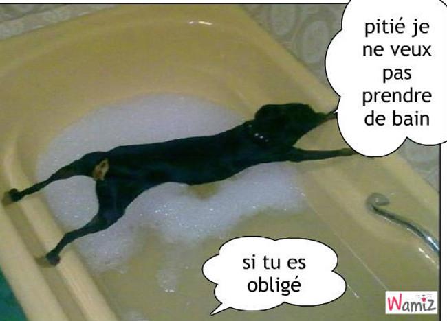 la baignoire de la mort, lolcats réalisé sur Wamiz
