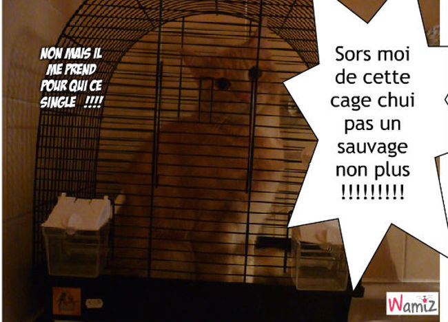 la cage, lolcats réalisé sur Wamiz