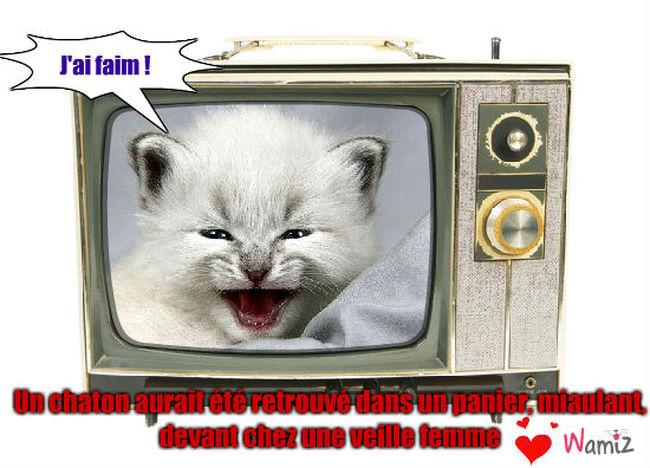 la chaton , lolcats réalisé sur Wamiz
