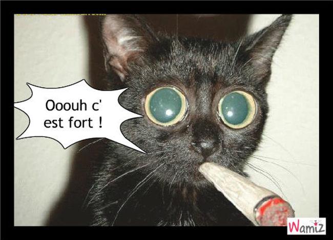 la cigarette pour chat, lolcats réalisé sur Wamiz