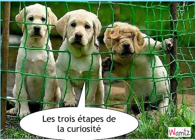 La curiosité , lolcats réalisé sur Wamiz