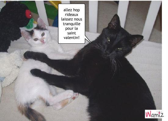 la fête des chats moureux!!, lolcats réalisé sur Wamiz