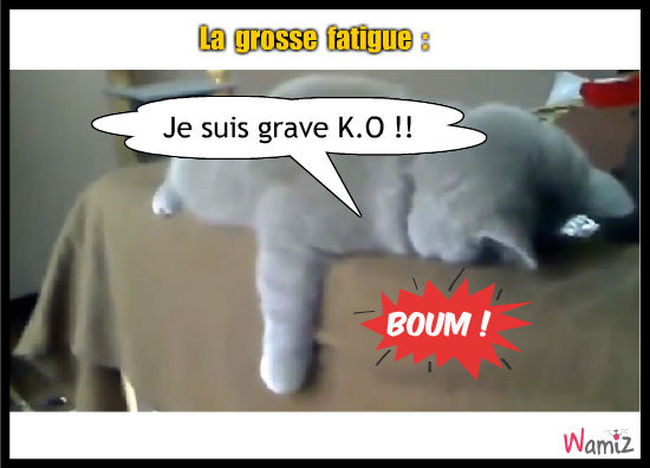 La grosse fatigue tooniz lolcats r alis sur wamiz for Je suis grosse