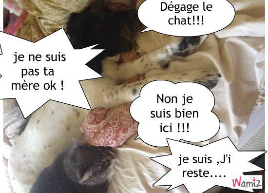 la méchante chatte, lolcats réalisé sur Wamiz