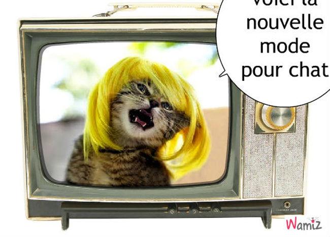 la nouvelle mode des chats, lolcats réalisé sur Wamiz
