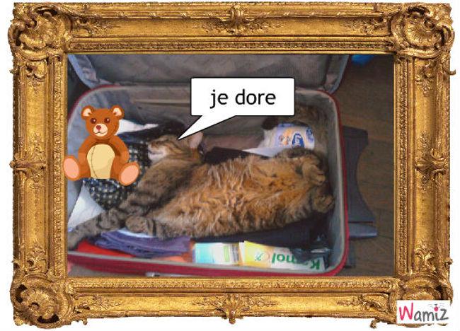 la valise, lolcats réalisé sur Wamiz