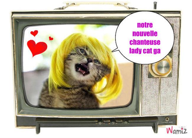 lady cat ga, lolcats réalisé sur Wamiz