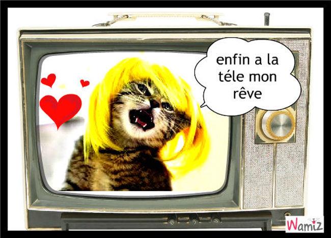 laidy chatchat a la tv, lolcats réalisé sur Wamiz