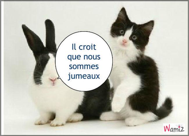 Lapin et chat, lolcats réalisé sur Wamiz
