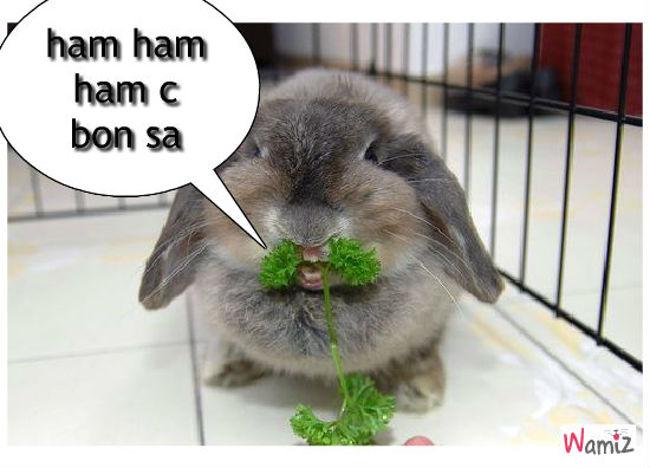 lapin mangeur de légume, lolcats réalisé sur Wamiz