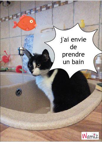le bain !!!! , lolcats réalisé sur Wamiz