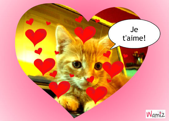 Chat amour fr