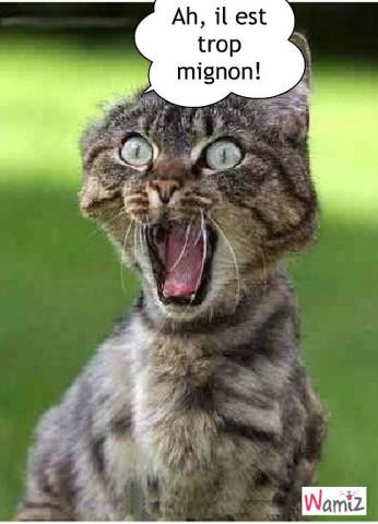 le chat amoureux, lolcats réalisé sur Wamiz