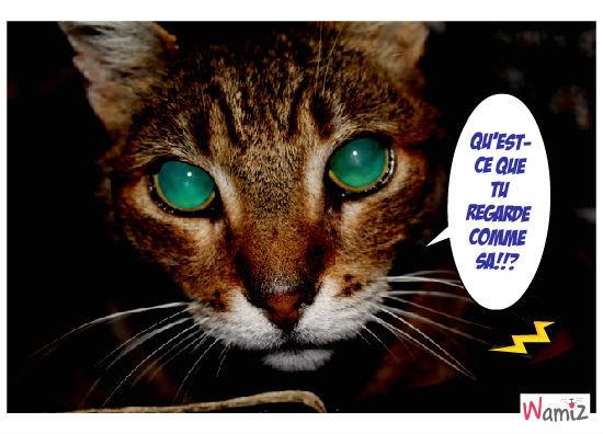 Le chat au regard qui fait flipper, lolcats réalisé sur Wamiz