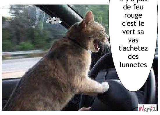 le chat auto, lolcats réalisé sur Wamiz