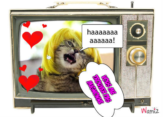 le chat concert, lolcats réalisé sur Wamiz