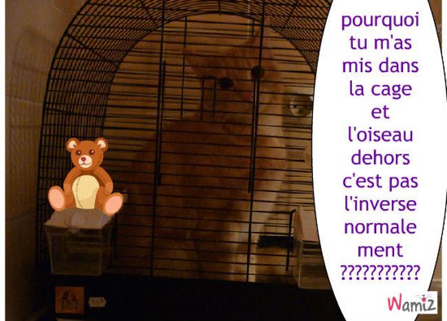 LE CHAT DANS LA CAGE DE L'OISEAU, lolcats réalisé sur Wamiz