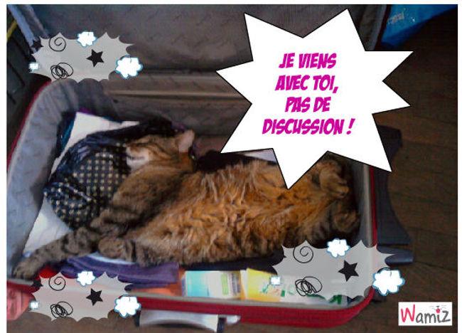 Le chat dans la valise., lolcats réalisé sur Wamiz