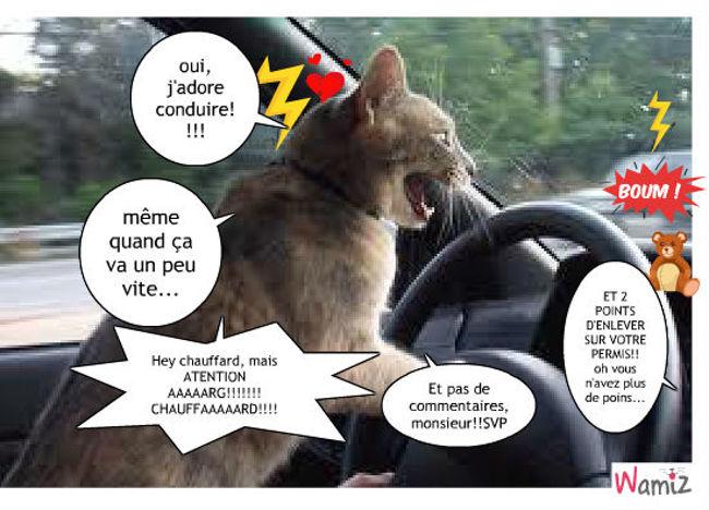 le chat en voiture, oups catastrophe!!!, lolcats réalisé sur Wamiz