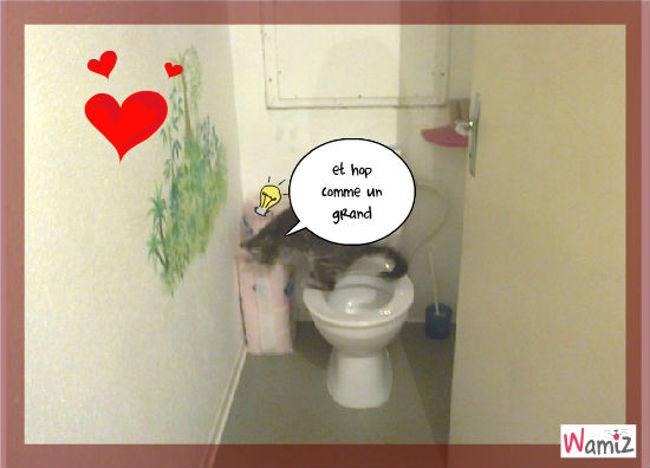le chat et le toilette, lolcats réalisé sur Wamiz