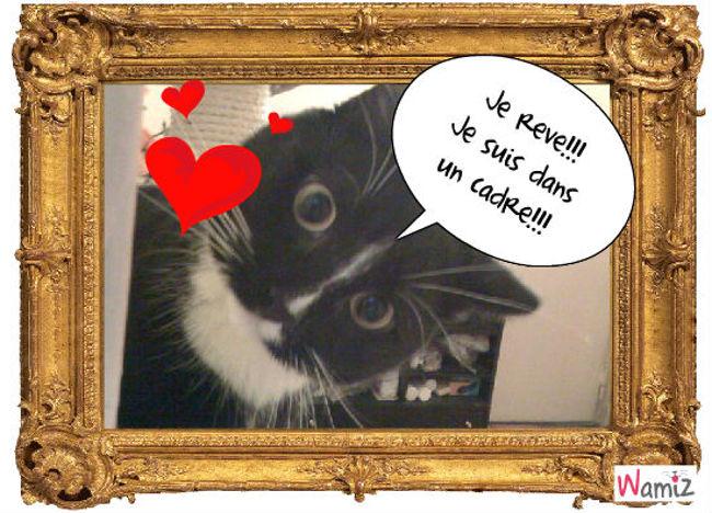 Le chat etonne!, lolcats réalisé sur Wamiz