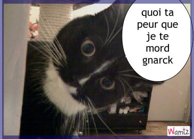 le chat flipeur, lolcats réalisé sur Wamiz