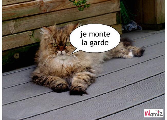 le chat gardien, lolcats réalisé sur Wamiz
