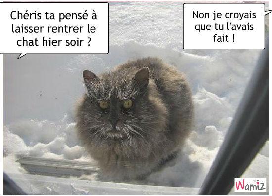 Topic des chats - Page 12 Le-chat-il-les-reste-dehort-sous-la-neige-23470