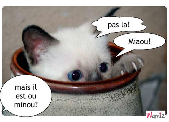 le chat le plus malin du monde, lolcats réalisé sur Wamiz