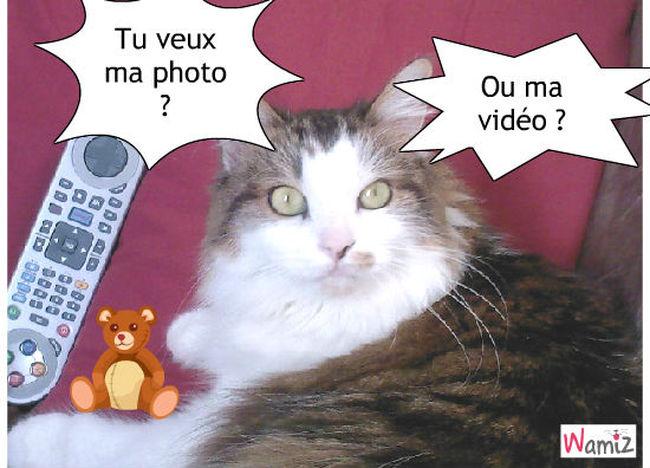 Le chat pas simpa, lolcats réalisé sur Wamiz
