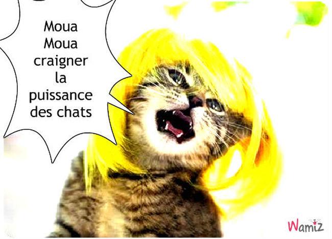 le chat qui chanter faut, lolcats réalisé sur Wamiz