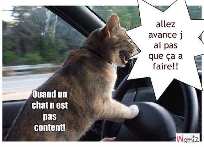 le chat qui conduit, lolcats réalisé sur Wamiz