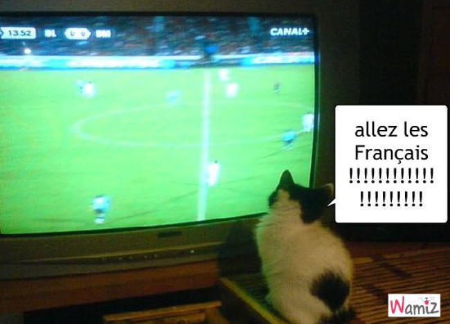 le chat qui encourage les français, lolcats réalisé sur Wamiz