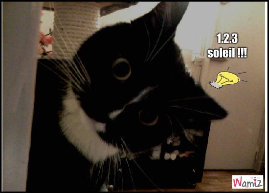 le chat qui joue a 1.2.3 soleil, lolcats réalisé sur Wamiz