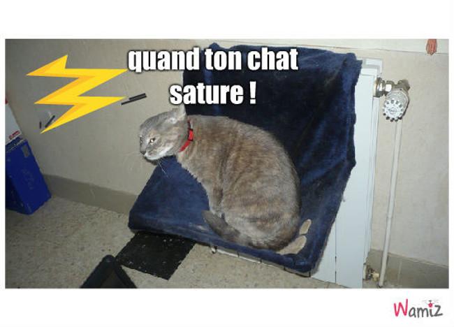 le chat qui sature, lolcats réalisé sur Wamiz