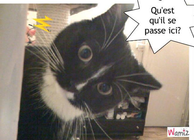 le chat rapide, lolcats réalisé sur Wamiz